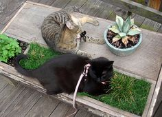 DIY 2 Cat Table