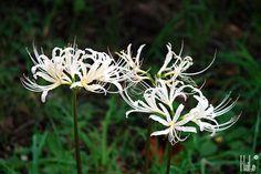 1001 loài hoa - Page 229