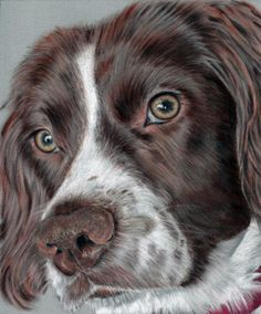 Dog in pastels
