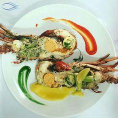 Langosta preparada por nuestro chef ejecutivo Felipe Gonzales.