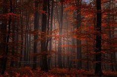 Spiritual Wood, by Philippe Sainte-Laudy