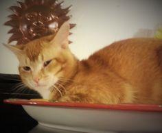 Cat In Bread Box Simple Cat Slipping  Gatos  Pinterest  Cat Decorating Design