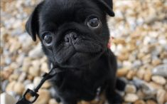 Pin for Later: 25 of the Cutest Puppy GIFs Ever — You're Welcome Who could resist those eyes?