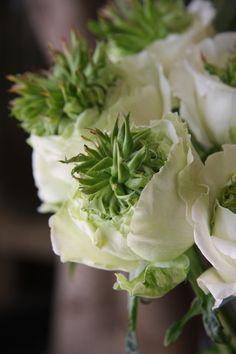 Rose 'green heart'