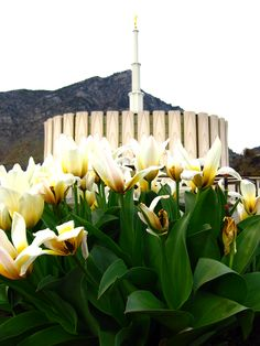 Beautiful Provo Temple