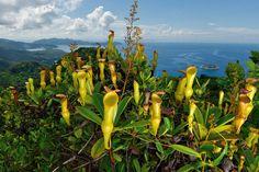 インド洋に浮かぶ楽園のような島国セーシェル。外来の動植物によって固有種が脅かされているが、在来の生態系を回復させる新たな取り組みが進む。