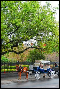 Carriage on Jackson Square, New Orleans, Louisiana, USA