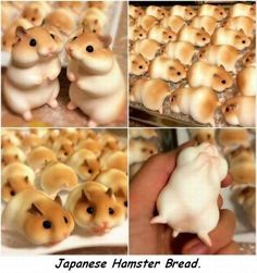Japanese hamster bread is so realistic that it even has a delicious yeasty bumhole. Japanese Bakery, Japanese Sweets, Japanese Dinner, Japanese Bread, Cute Food, Good Food, Yummy Food, Japanese Hamster, Bread Rolls