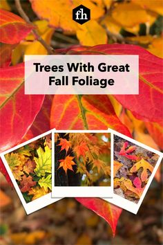 Trees With Great Fall Foliage