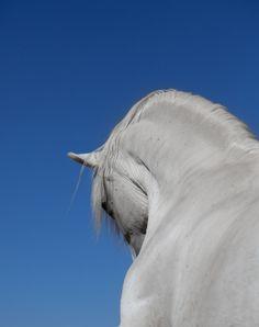 Fantastic angle! - Andalusian horse