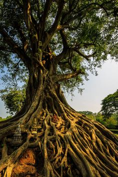 ~~holy tree ~ a serene spot where nature becomes a temple by Killian Blais~~