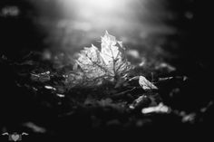 Autumn, Fall, Celestial, Outdoor, Fall Leaves, Autumn Leaves, Monochrome, Nature, Outdoors