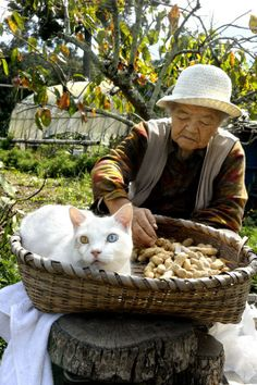 Miyoko Ihara has been taking photographs of her grandmother, Misao and her beloved cat Fukumaru since their relationship began in Their closeness has been captured through a series of lovely photographs. Cool Cats, I Love Cats, Japanese Bobtail, Japanese Cat, Crazy Cat Lady, Crazy Cats, Bobtail Japonais, Animals And Pets, Cute Animals