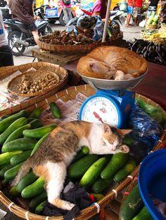 Market kitties @ Cebu