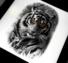 Realistic tiger tattoo design done in black and grey by Brandon Marques. Timeless Tattoo Studio, Toronto, ON. For appointments and info visit our website or email: info@timelesstattoos.ca