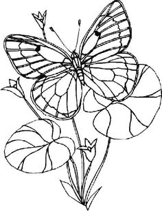 butterfly coloring page 55 is a coloring page from butterfly coloring booklet your children express their imagination when they color the butterfly