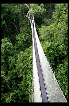 Canopy Walk - Iquitos, Loreto, Peru. Did you know the Inca's made these types of bridges out of grass? One of the most harrowing scenes in The Last Conquistador takes place on one of these bridges.