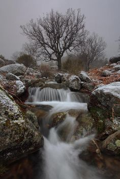 """"""" Winter Song """"  By: Juan Pavon"""