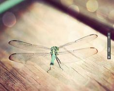 mint dragonfly print turquoise green aqua blue by TheGinghamOwl | Wedding Pins! The Best Wedding Picture Ideas! Create Your Wedding Picture List Today!
