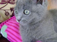 Little sweet cat...Cleo <3