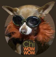 ChiWowWow Clothing for Designer Dogs Features Surfer Brands #pets