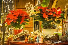 Cenas de Natal 3! by Joao Palmela