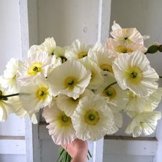 Floret Iceland Poppies Champagne Bubbles via Floret Flowers Giving Flowers, Cut Flowers, Fresh Flowers, Paper Flowers, Cut Flower Garden, Flower Farm, My Flower, Bulbs And Seeds, Icelandic Poppies