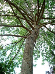 All Around Arbor Tree Service - Tree Service Portland