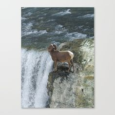"""Fine art print on bright white, fine poly-cotton blend, matte canvas using latest generation Epson archival inks. Individually trimmed and hand stretched museum wrap over 1-1/2"""" deep wood stretcher bars. Includes wall hanging hardware. https://society6.com/product/big-horn-sheep-rocky-mountain-waterfall_stretched-canvas?curator=skyeryanevans"""