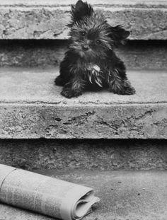 Cute puppy dog.