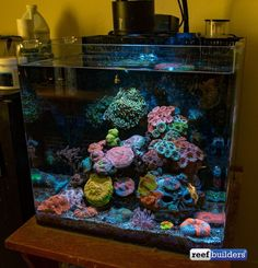 Saltwater Aquarium Fish - Find incredible deals on Saltwater Aquarium Fish and Saltwater Aquarium Fish accessories. Let us show you how to save money on Saltwater Aquarium Fish NOW!