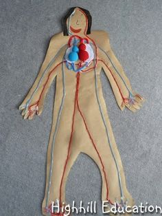Aparato circulatorio con lanas