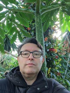 Le feuillage gigantesque de l'arum titan, Kew Gardens http://www.pariscotejardin.fr/2016/02/le-feuillage-gigantesque-de-l-arum-titan/