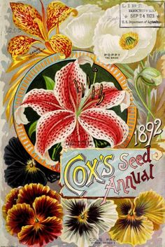 'Cox's Seed Annual' 1892 with an illustration of Canna (Emile Le Claire), Poppy (The Bride), Lilium Anratum  and Cox's Prize Pansies.U.S. Department of Agriculture, National Agricultural Library archive.org