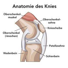 Nursing Mnemonics, German Language Learning, Medical Anatomy, Bones And Muscles, Learn German, Anatomy And Physiology, Study Motivation, Medical School, Human Anatomy