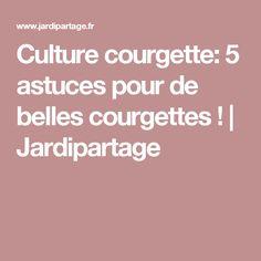 Culture courgette: 5 astuces pour de belles courgettes ! | Jardipartage