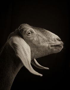 #goatvet says this series of blcak & white photos are works of art