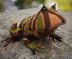 rare animals in amazon - Google'da Ara