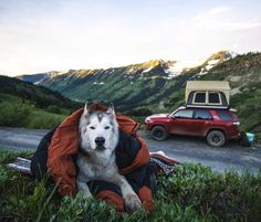 Camping House For Rent Info: 9114966240 Wolf Husky, Husky Husky, Loki, Camping Aesthetic, Types Of Dogs, Alaskan Malamute, Camping Life, Outdoor Life, Toyota Land Cruiser
