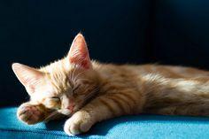Kitten Sleeping in the Sun   par transition_theme_for_minor_blues