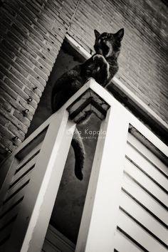 Catspotting – balcony cat in Utrecht | Cropping Reality by Ula Kapala