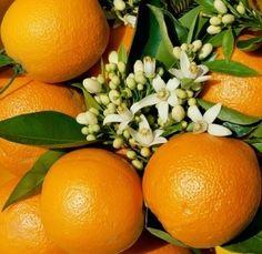 Como todas las frutas cítricas, la naranja es ácida, con un pH entre 2,5 y 3, según la madurez, tamaño y variedad de la pieza, que se puede emplear para hacer zumo.
