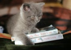 A very young kitten who has just got its first library card, taken out both my cat books on loan, and is now travelling home with them in the back of a very comfortable horse-drawn wagon.
