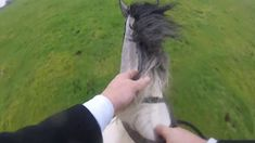 Comanche Hunting with Galway Blazers Cross Country Jumps, Beach Rides, Great Days Out, Equestrian, Ireland, Blazers, Hunting, Pets, Animals