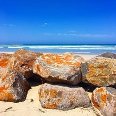Escape: Port Fairy Australia #Australia #australian #portfairy #portfairypics #beach #beauty #nature #life #live #love #lifestyle #coast #sun #sea #sand #surf #sky #waves #travel #travels #travelgram #travelling #instagram #instagood #relax #ELE by eat.live.escape http://ift.tt/1UokfWI