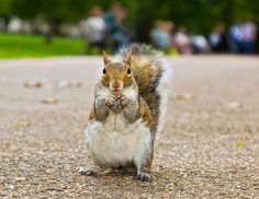 it's official - chipmunks are cute