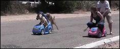 Dog vs Human in a Race | TrendUso #dog #dogs #human #humans #race #racing #ViralVideo #ViralVideos #trending #video #viral #videos #funny #hilarious https://www.trenduso.com/p/1enp3ohd8 #dogsfunnyvideos