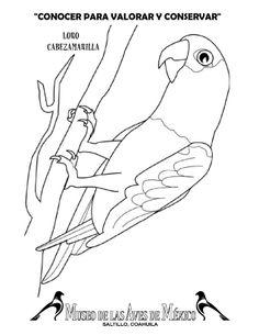 guila arpa descarga imprime pinta museo de las aves de mxico bricolaje y manualidades pinterest guila arpa las aves y pintas