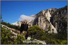 wbgarden dwarf conifers