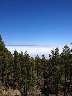 Tenerife Aguamansa mar de nubes